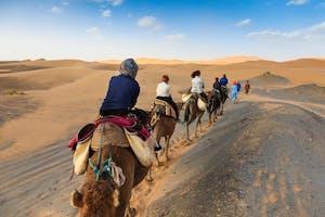 Camel Caravan / Horse Riding