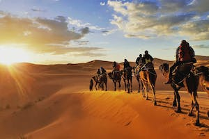 Camel Sunset & Barbecue