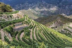 Mountainous Larnaca - Nicosia Wine Route